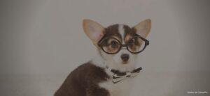 Hundeschule Online