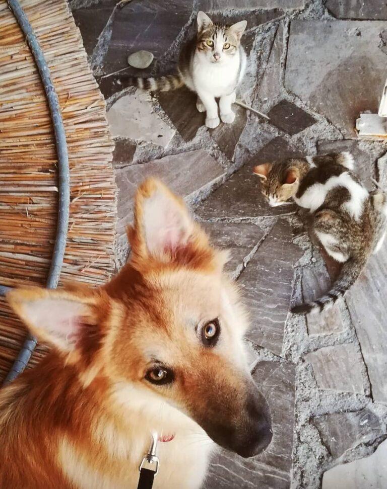 Hund an Katze gewöhnen