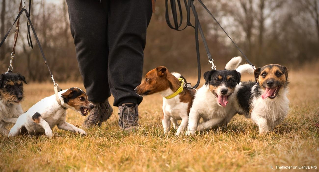 Jagdgebrauchshunde Familienhund