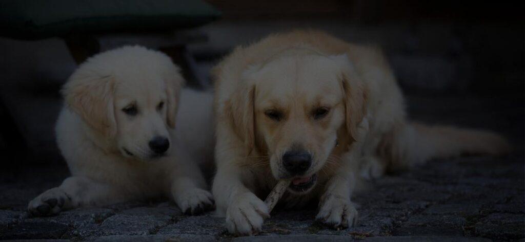 Kommunikation unter Hunden