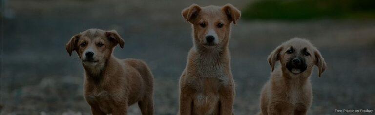 Tierheim Hundewelpen