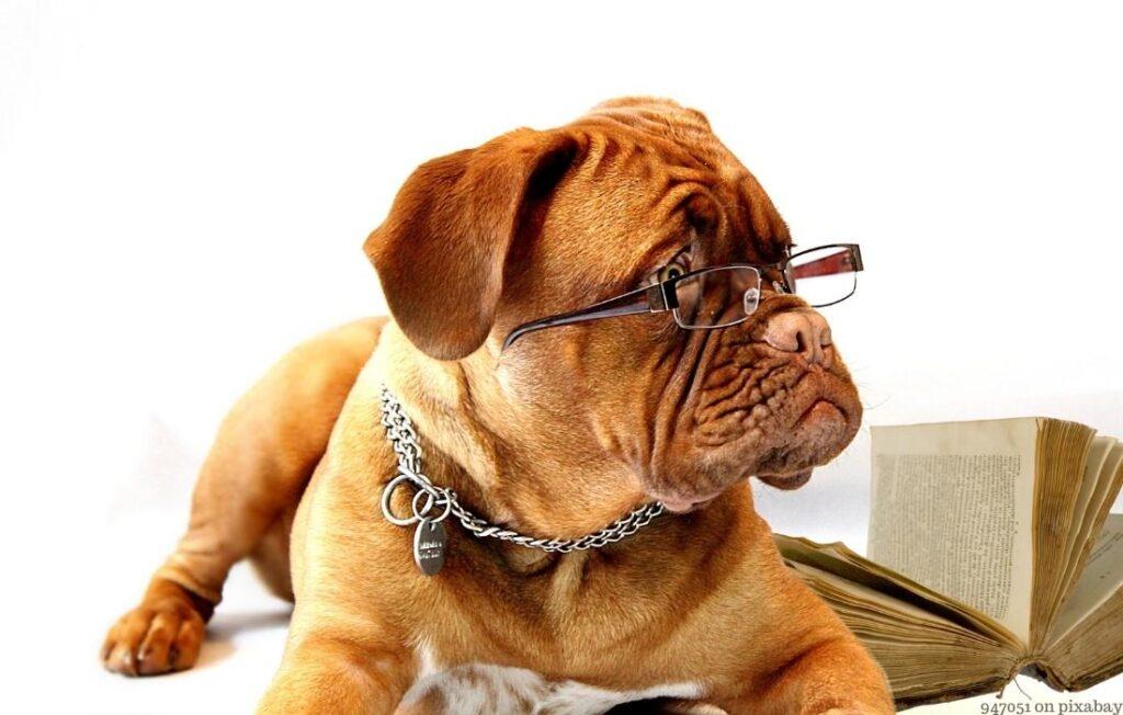 Hundeschule oder Verein